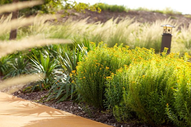 yucca and mint marigold lindheimer muhly
