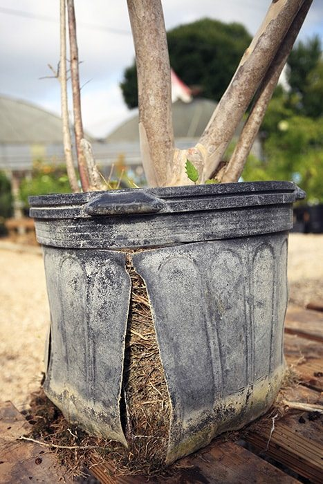 splitting planting containers