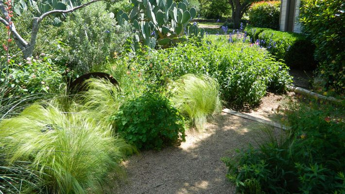 Great Textures in Xeriscaped Beds