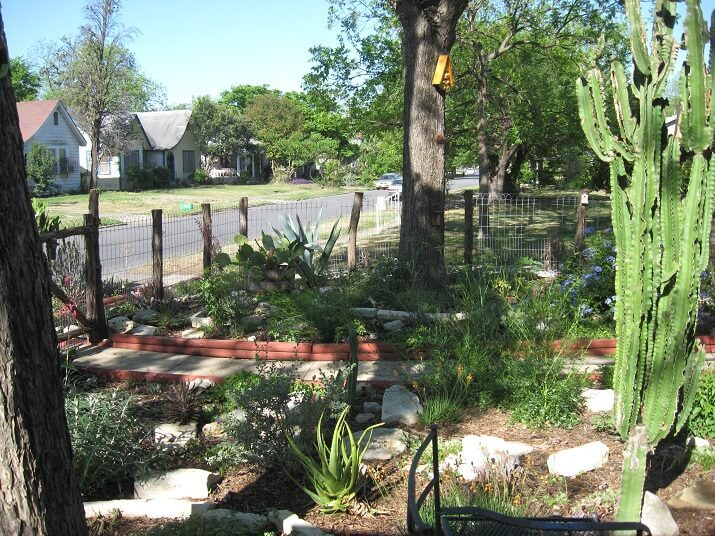 fun front yard pathway with cactii