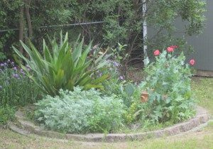 Giant lillies and re-seeding poppies