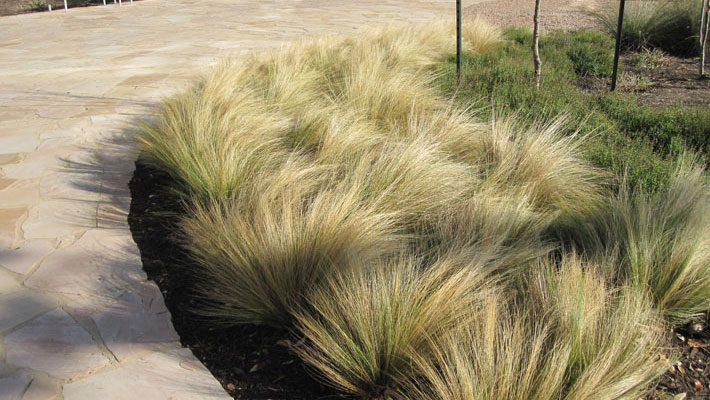 Simple and Soft grasses