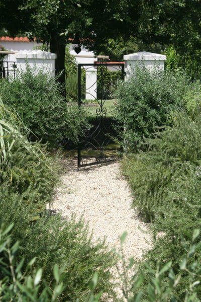 olive plants lining walkway | SAWS Garden Style Conservation Water Saver San Antonio Texas