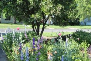 Perennials and reseeding annuals together