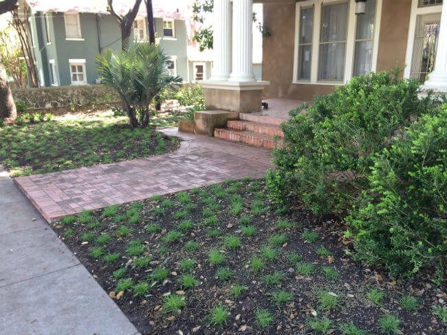water saver solutions to grass, planting | SAWS Garden Style Conservation Water Saver San Antonio Texas