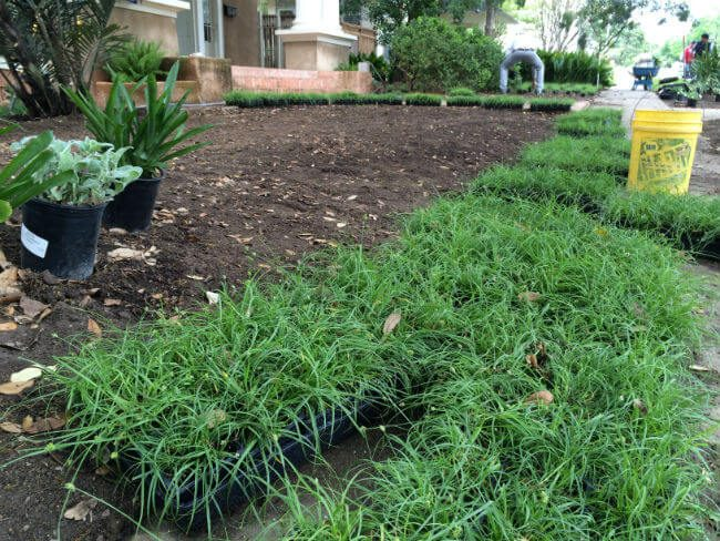 replacing grass with other plants | SAWS Garden Style Conservation Water Saver San Antonio Texas