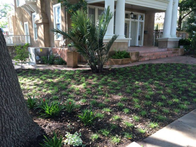 scotts edge, replacing grass with more water conscious plants | SAWS Garden Style Conservation Water Saver San Antonio Texas