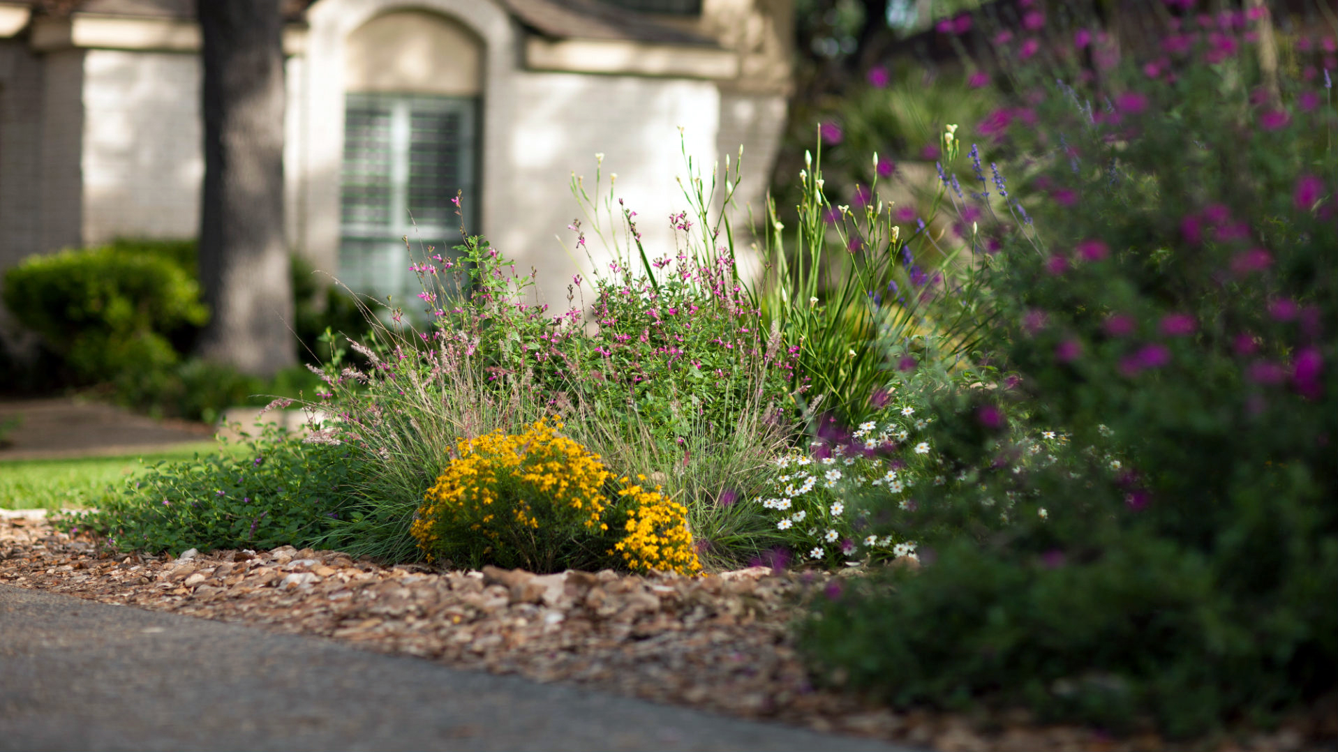 WaterSaver Landscape flower bed