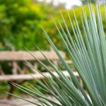 Agave bench