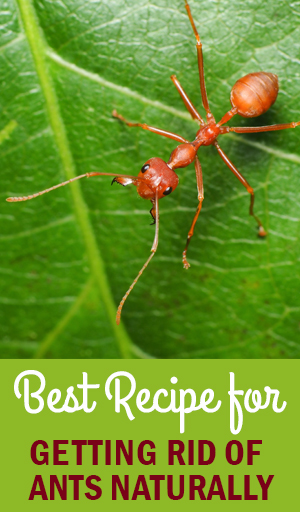 How To Get Rid Of Fire Ants In Your Plants Garden Style San Antonio