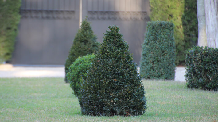 Tips And Tricks Of Topiary Garden Style San Antonio