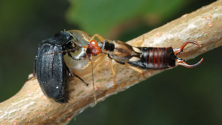 Insects In The Landscape Decomposers Of Organic Matter Garden