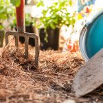 Plants, tools and tips for new gardeners.