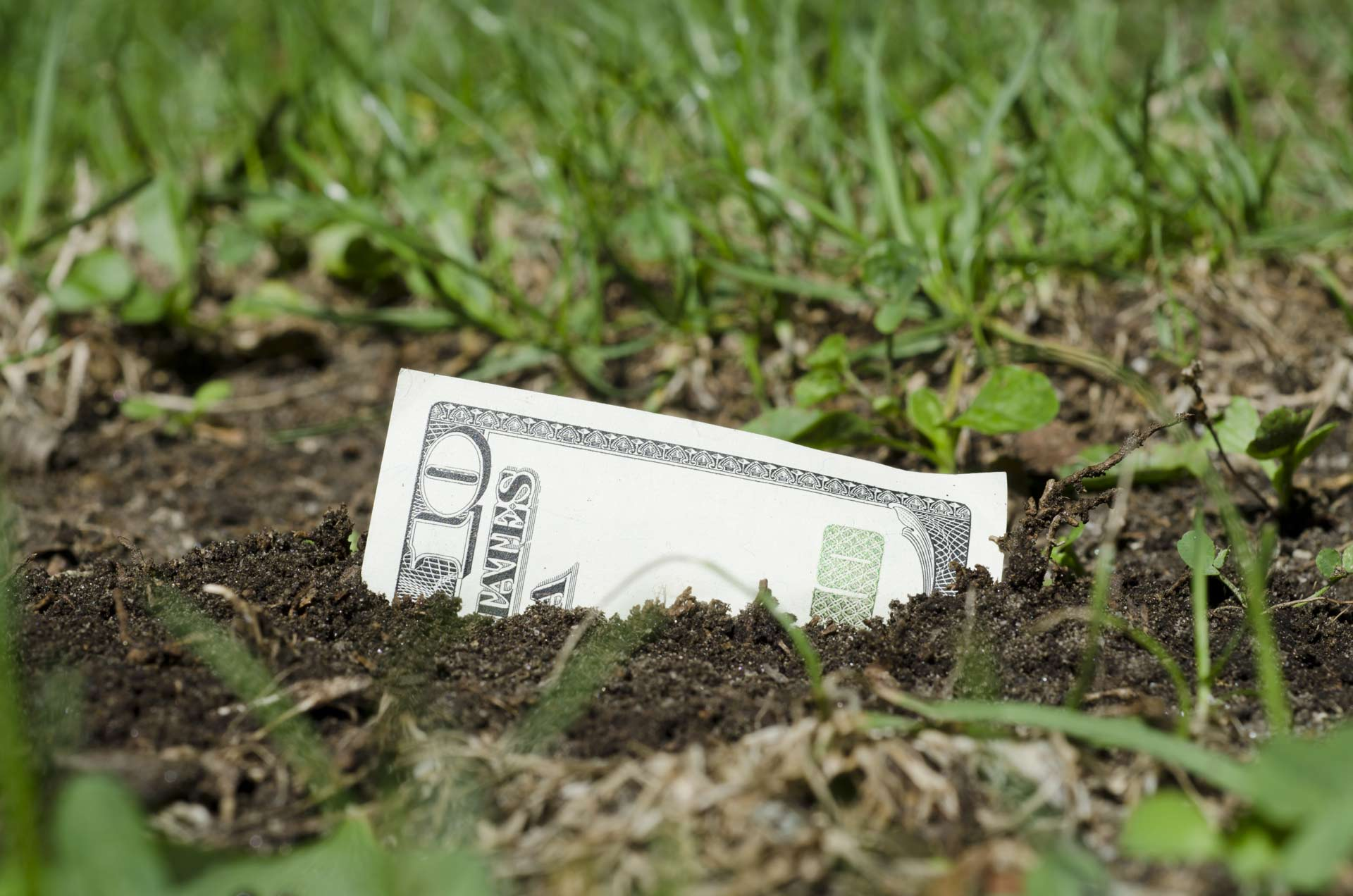 watersaver rewards dollar bill sprouting from the earth | SAWS Garden Style Conservation Water Saver San Antonio Texas