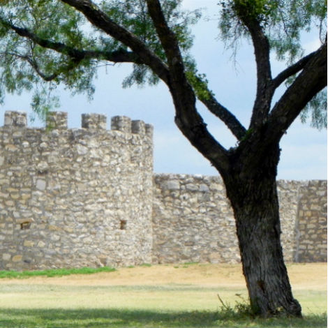 A stark mesquite tree stands guard outside San Saba mission.