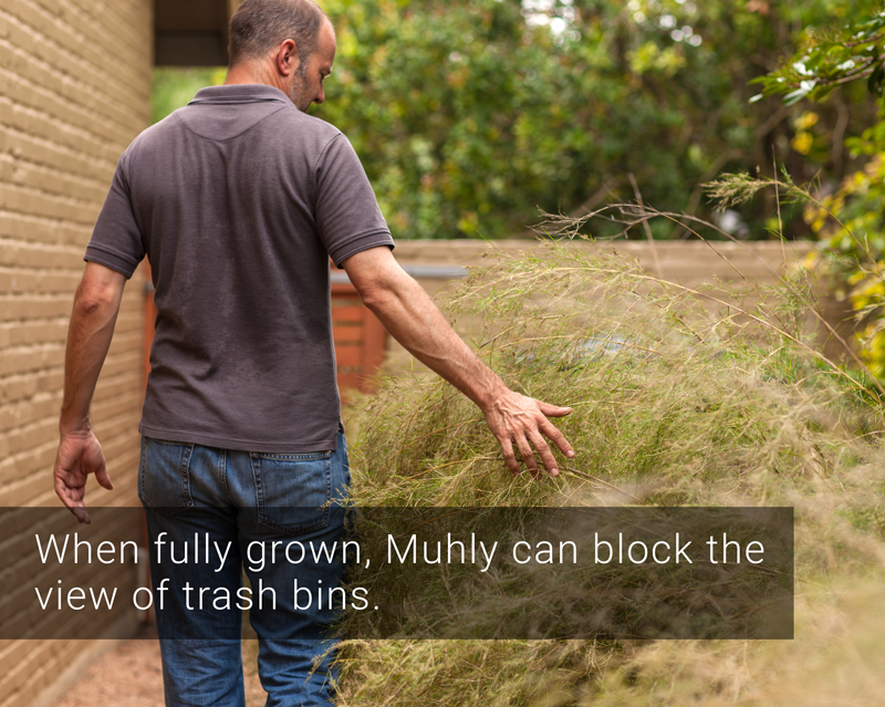 side-yard makeover with stepping stones and muhly