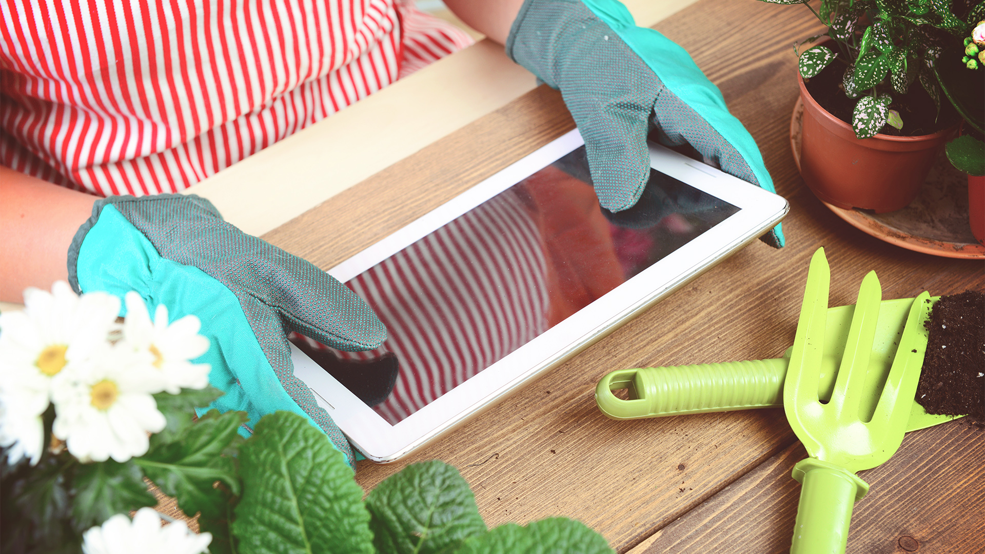 Woman's hands potting some plants ( with tablet pc)