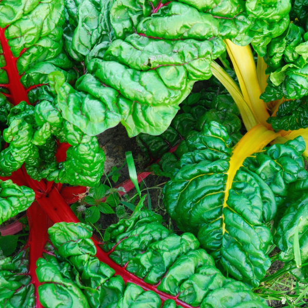 Swiss chard leaves.