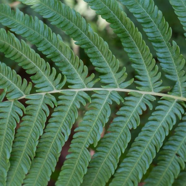 Autumn fern leaves